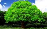 Oak_tree_by_attila0427-1024x640